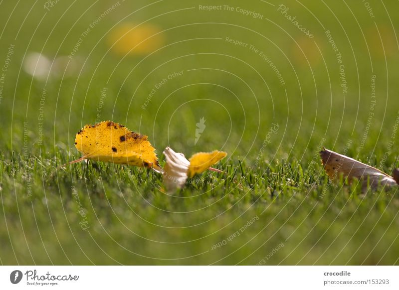 foliage Leaf Autumn Lawn Grass Blade of grass Blur Far-off places Death Peace bokee tele Limp