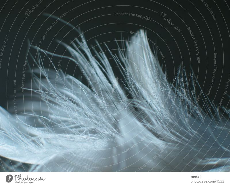 Feathers - Variation #3 White Black Background picture Bird Macro (Extreme close-up)