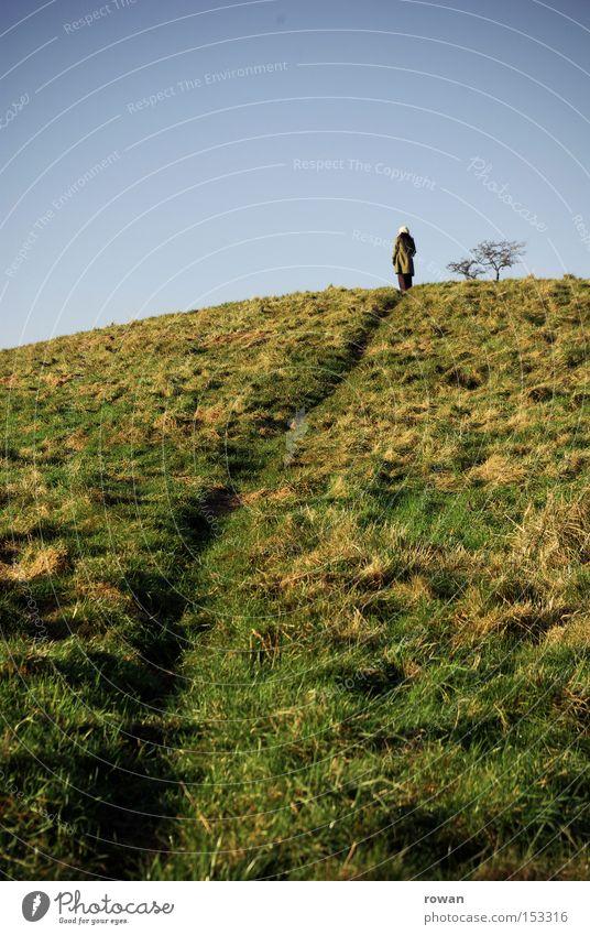 Tree Landscape Mountain Lanes & trails Hiking To go for a walk Hill Tracks Footpath Fairy tale Novella
