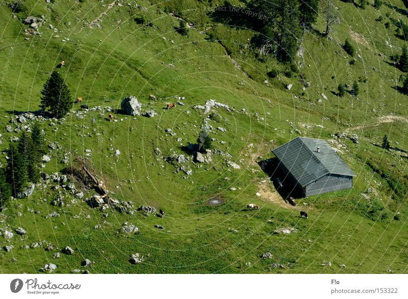 Mountain Alpine pasture Alpine hut Almabtrieb