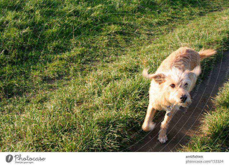 Green Summer Joy Animal Autumn Meadow Jump Dog Lanes & trails Walking Lawn Ear Duesseldorf Paw Swing Snout