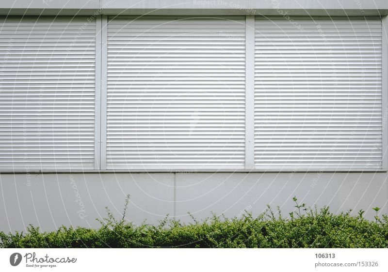 Green City White Plant Loneliness House (Residential Structure) Window Dark Meadow Bright Going Closed Arrangement Bushes Sleep Vantage point