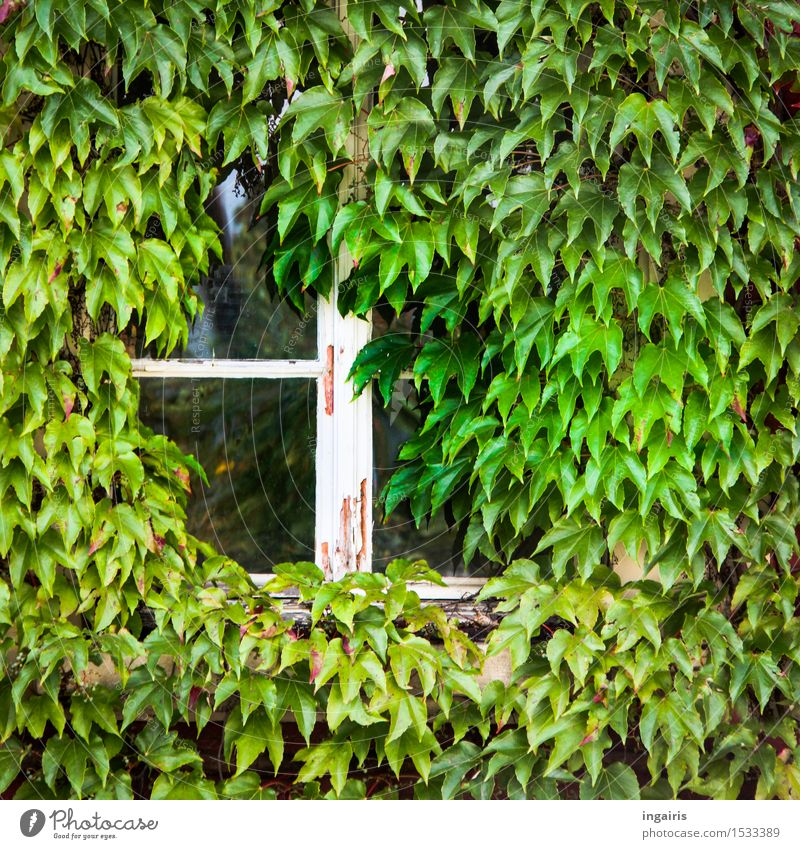 Nature Old Plant Green White Leaf House (Residential Structure) Window Life Natural Religion and faith Building Exceptional Moody Facade Growth