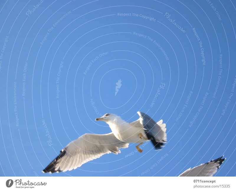 landing approach Glide Bird seagull celebration Free Flying Aviation Wing