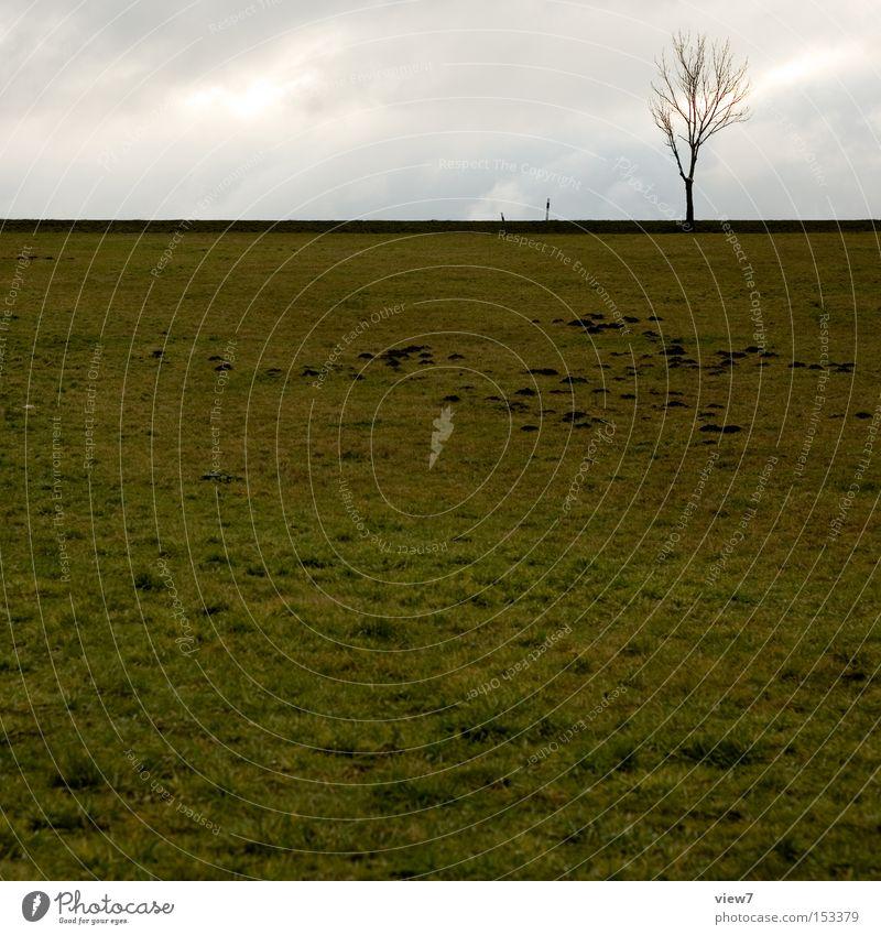 MoleCity Tree Meadow Field Horizon Weather Sky Gloomy Loneliness Free Calm Autumn Winter Earth Boredom molehills