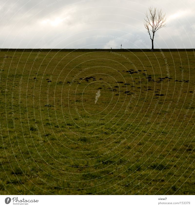 Sky Tree Winter Calm Loneliness Autumn Meadow Field Weather Free Horizon Earth Gloomy Boredom Mole