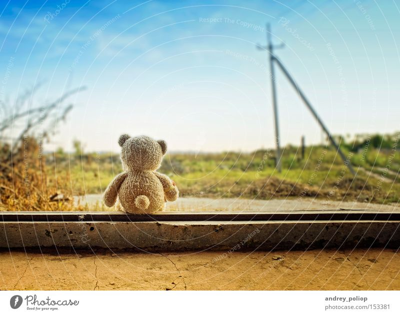little bear Beautiful Animal Background picture Colour Cute Fantasy Grass Green Happy Life Nature Sky Small Infancy