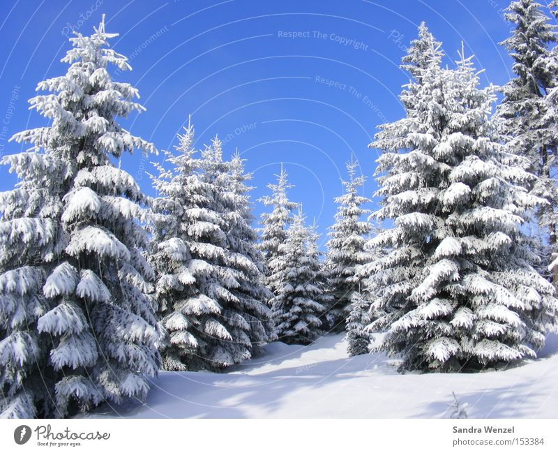 Nature Blue White Tree Vacation & Travel Plant Winter Forest Relaxation Environment Landscape Snow Mountain Weather Beautiful weather Wanderlust