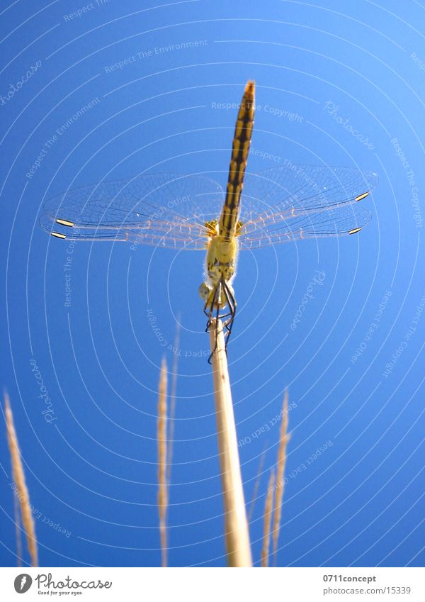 Large dragonfly Ready to go Dragonfly Air Beginning Insect Sky Wing Flying Blade of grass Close-up 0711concept