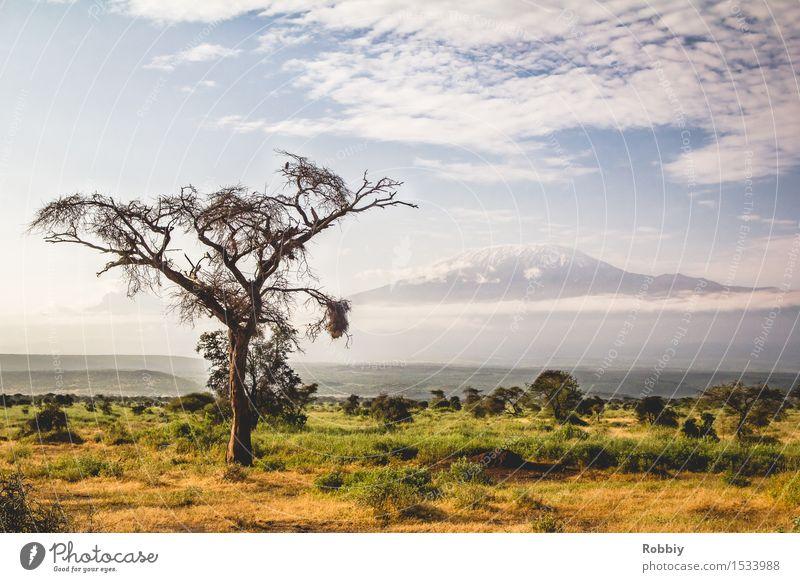 Kilimanjaro Vacation & Travel Tourism Trip Adventure Far-off places Safari Expedition Camping Mountain Hiking Nature Landscape Tree Grass Bushes Acacia Peak