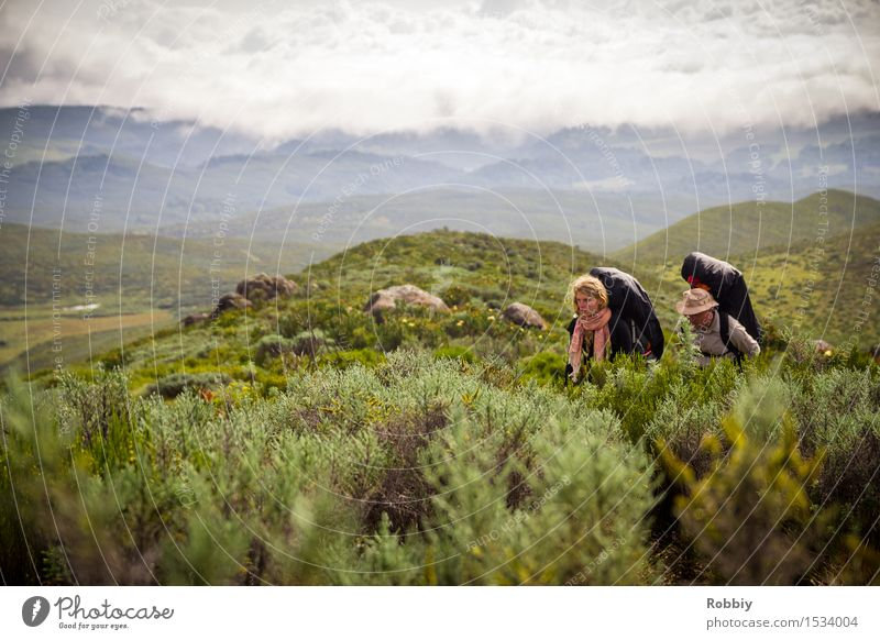 Ascent Mt. Kenya Leisure and hobbies Hiking Mountaineering Vacation & Travel Tourism Trip Adventure Far-off places Expedition Camping Human being 2 Nature