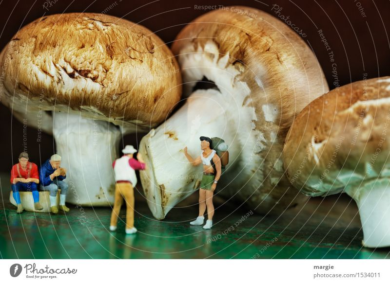 Miniwelten - Mushroom tourism Vegetable Nutrition Eating Picnic Organic produce Vegetarian diet Healthy Eating Vacation & Travel Tourism Trip Sightseeing