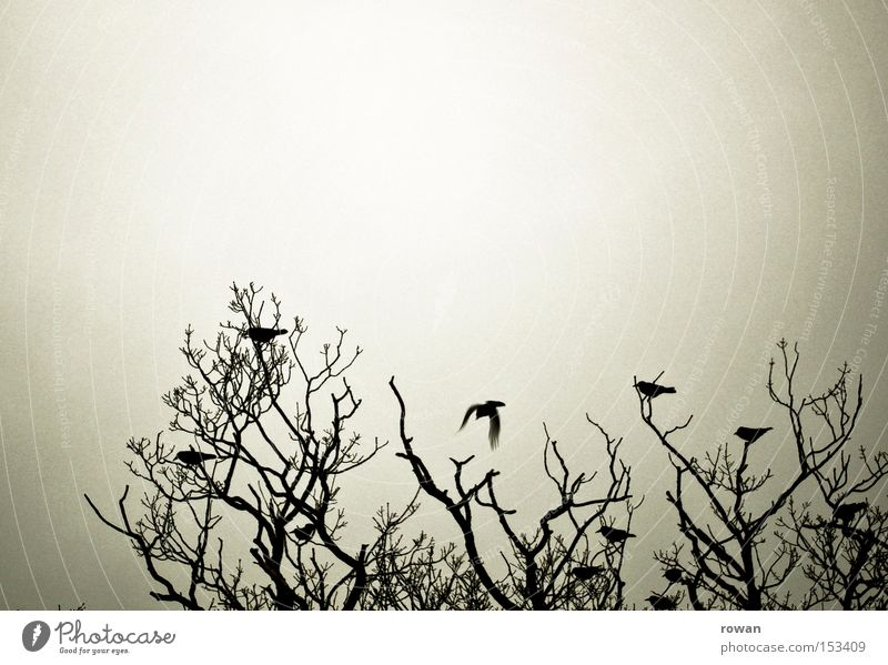 bird meeting 2 Tree Branchage Bird Raven birds Flock of birds Dark Creepy Silhouette Together Encounter Assembly Multiple Spooky