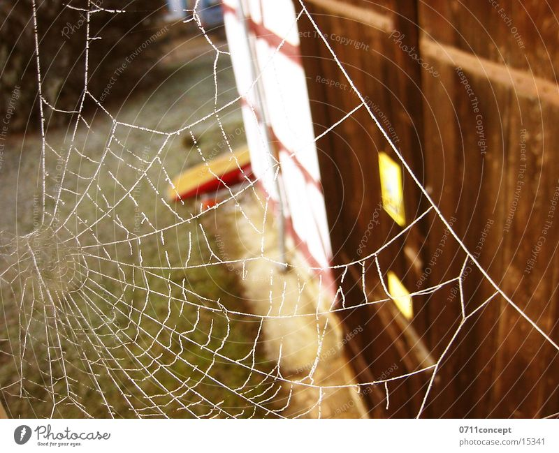 Fie, spider! Spider Spider's web Window Net Gate
