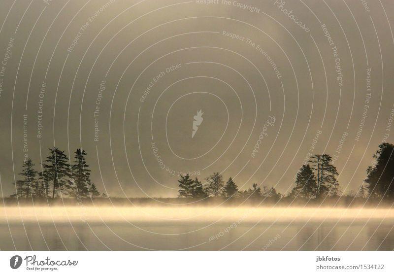 Nature Beautiful Tree Landscape Environment Lake Uniqueness Lakeside Morning fog The Orient