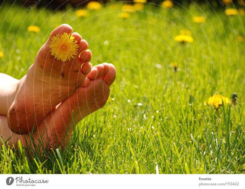 Flower Summer Joy Vacation & Travel Relaxation Meadow Blossom Feet Human being Dandelion