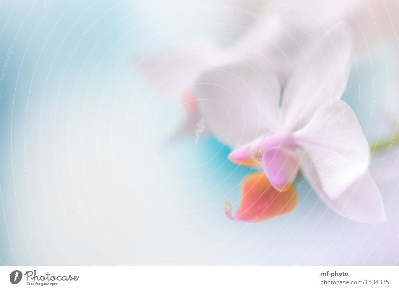 orchid Nature Plant Spring Flower Orchid Blossom Violet Pink Turquoise White Colour photo Close-up Macro (Extreme close-up) Deserted Day Blur