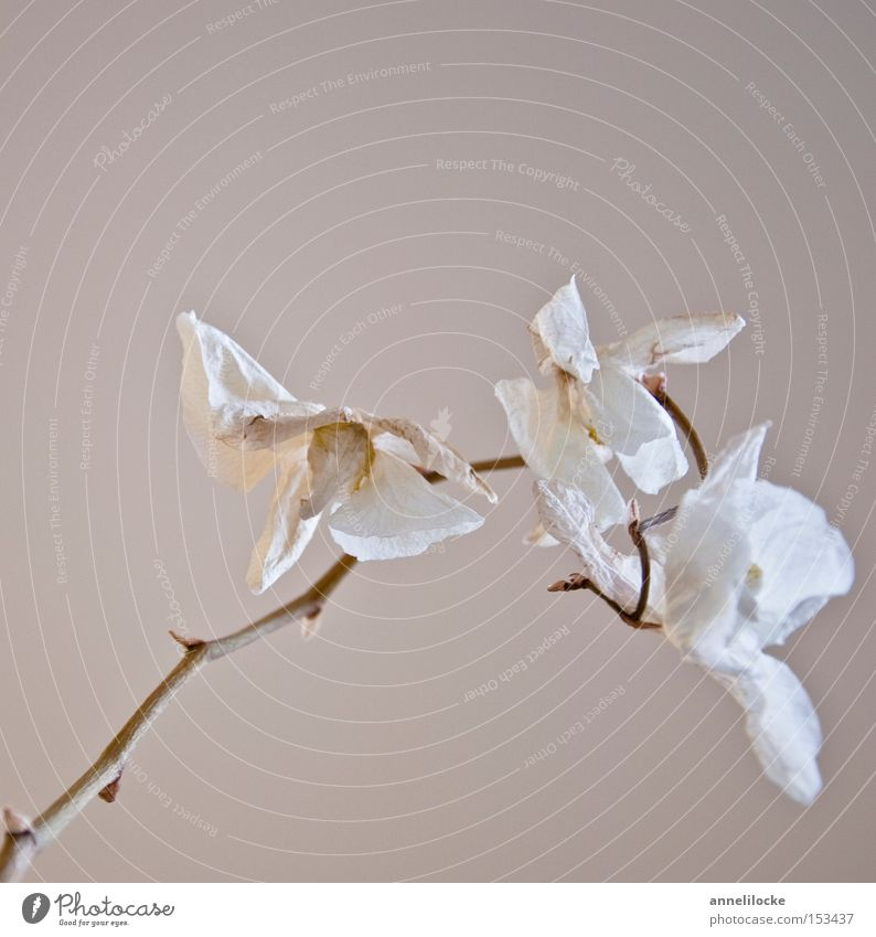 White Plant Flower Death Emotions Blossom Style Sadness Moody Elegant Esthetic Climate Living or residing Grief Transience Delicate