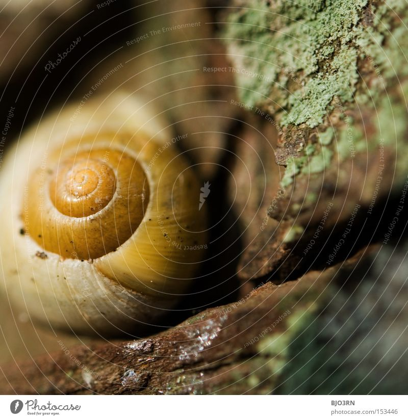 Nature Animal Safety Safety (feeling of) Snail Snail shell