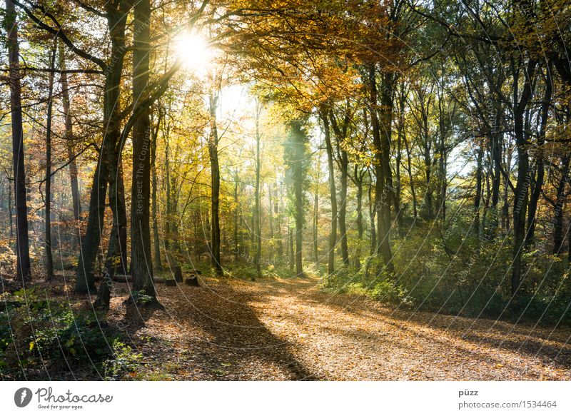 Golden Autumn Environment Nature Landscape Plant Sun Sunlight Beautiful weather Tree Leaf Forest Hiking Bright Warmth Multicoloured Yellow Green Autumnal