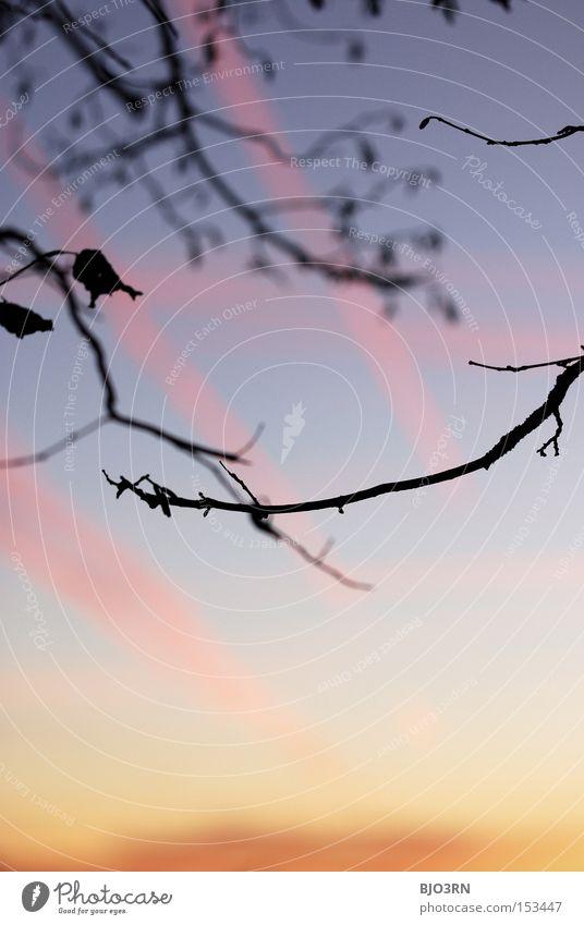 heavenly mess Sky Branch Twilight Wood Detail Leaf Nature Orange Red Pink Blue Vertical Exterior shot