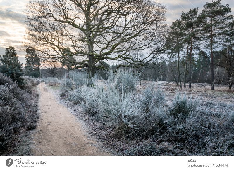 Wahner Heide Environment Nature Landscape Plant Sunrise Sunset Winter Weather Ice Frost Tree Grass Bushes Foliage plant Forest Heathland Going Hiking Blue Brown
