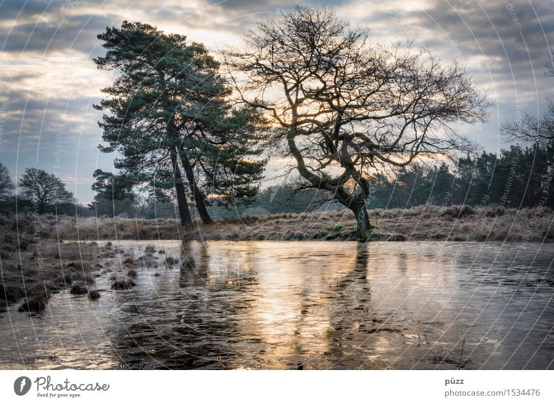 morning frost Environment Nature Landscape Plant Water Sky Clouds Winter Tree Lakeside Pond Dark Cold Gloomy Blue Yellow Gray Emotions Moody Dream Sadness