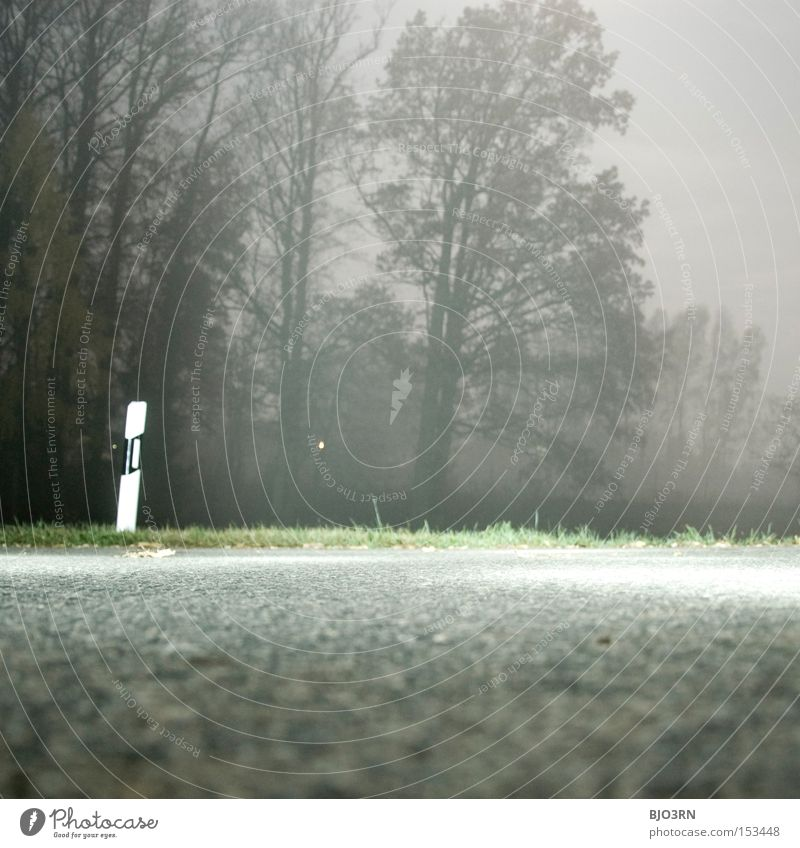 Tree Street Forest Fog Asphalt Creepy Square Tar Roadside Artificial Reflector post