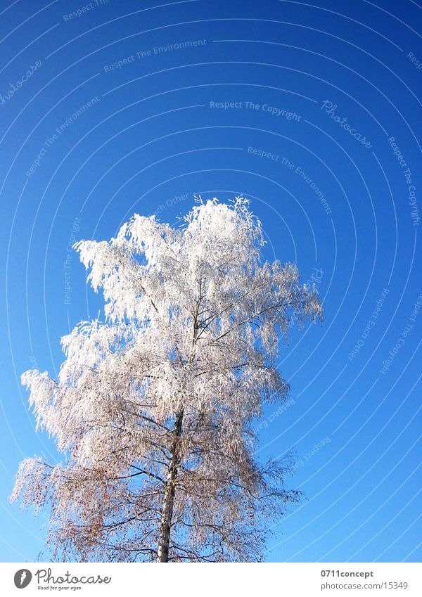 Vacation & Travel Blue Tree Loneliness Winter Cold Graffiti Snow Horizon Ice Empty Dangerous Point Threat Seasons Frozen