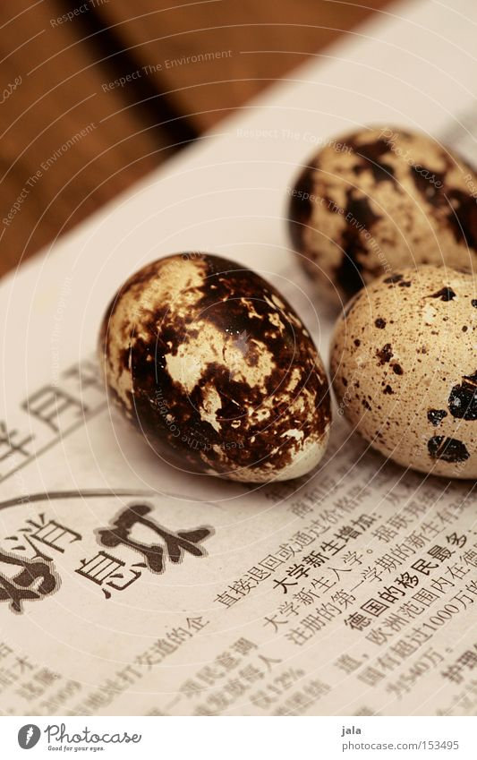 Wood Small Bird Food Nutrition Table Gastronomy Newspaper China Egg Asia Bird's egg Delicacy Gourmet Diminutive Media