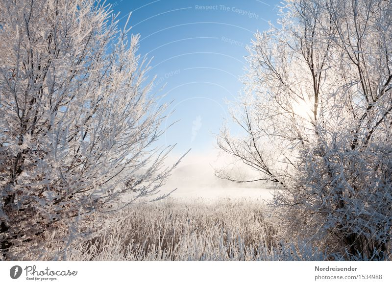 Winter in the Moor Nature Landscape Plant Cloudless sky Climate Beautiful weather Fog Ice Frost Snow Tree Bog Marsh Lake Fresh Cold Positive Blue White Calm