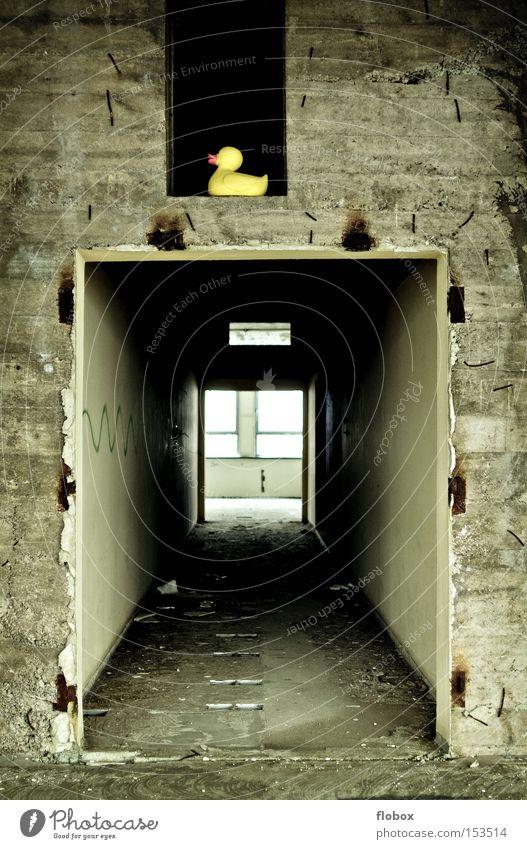 Old Loneliness Yellow Wall (building) Stone Bird Concrete Facade Factory Derelict Shabby Hallway Duck Corridor Squeak duck Harmful