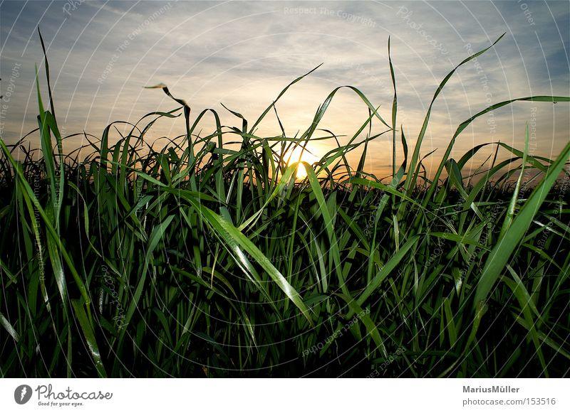 Nature Sky Sun Green Blue Summer Calm Clouds Grass Field