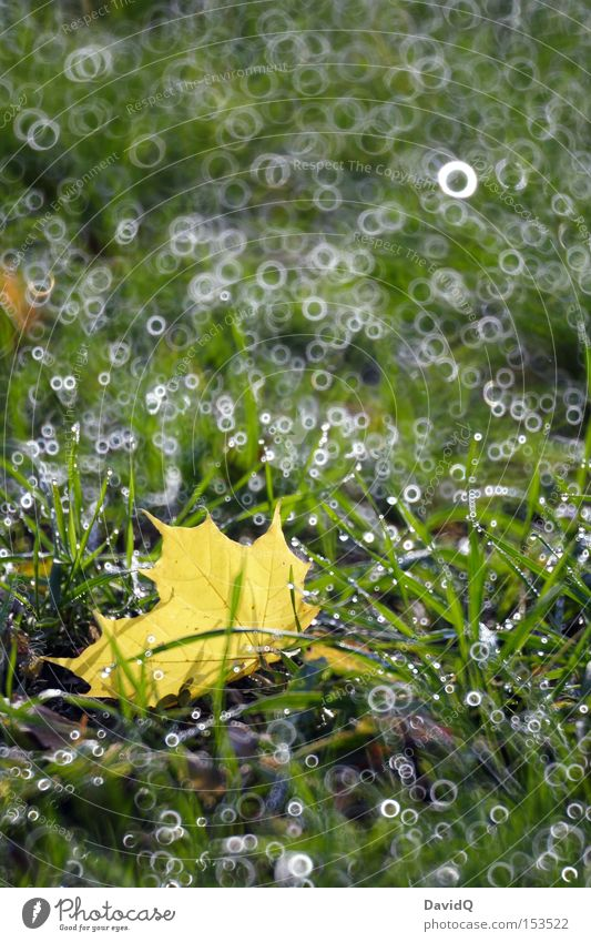 Green Leaf Meadow Autumn Grass Drops of water Dew Patch of light Pool of light Catadioptric system (effect)