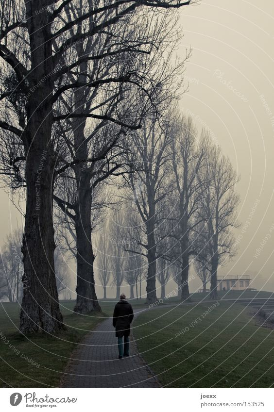 ponder Loneliness Tree Dark End Woman Think Cold Fog Calm To go for a walk Dreary Park Winter Target