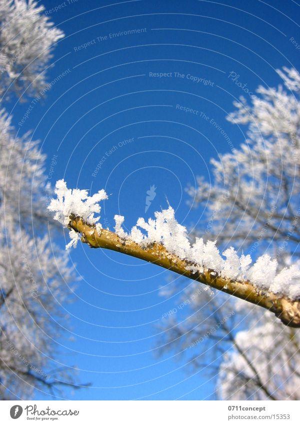 Vacation & Travel Blue Tree Winter Cold Graffiti Snow Horizon Ice Empty Dangerous Point Threat Star (Symbol) Seasons Frozen