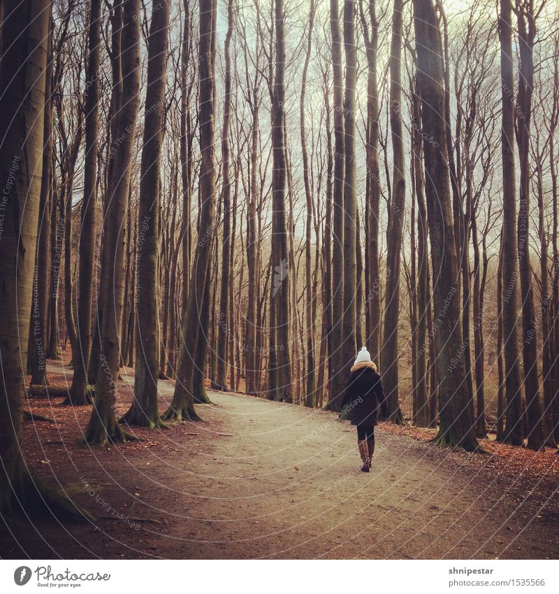 A woman walks in the woods Trip Island Hiking Promenade Human being Feminine Young woman Youth (Young adults) 1 30 - 45 years Adults Painter