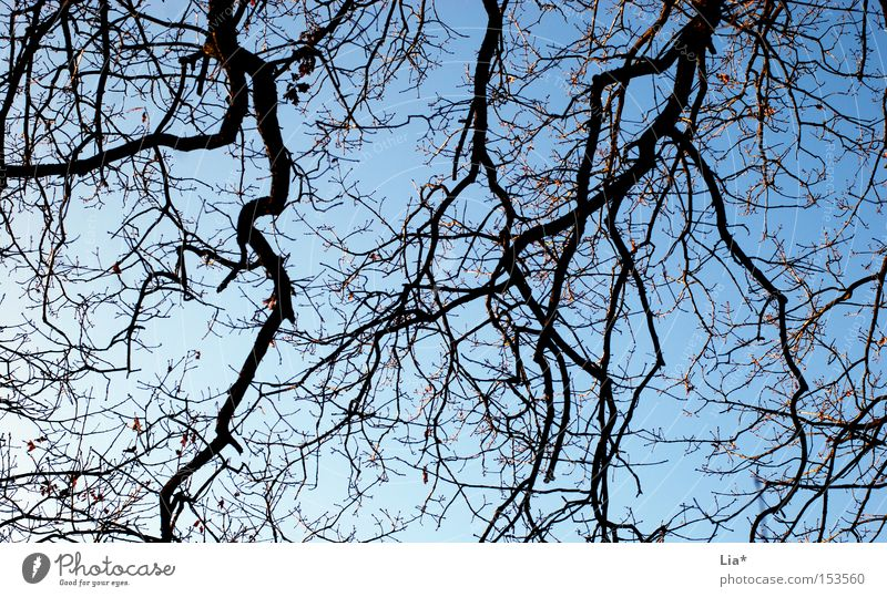 ramified Tree Twig Branch Tree trunk Sky Structures and shapes Blue Plant Branched Interlaced