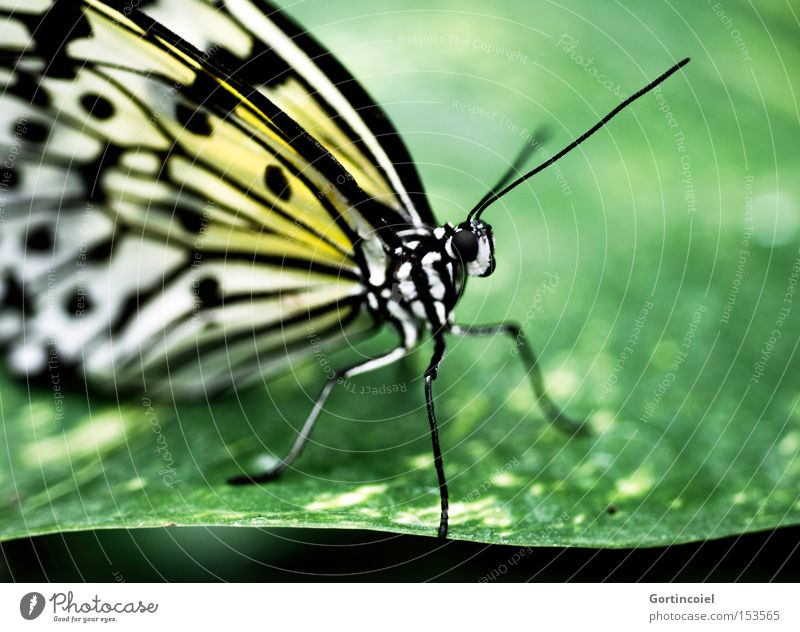Nature Beautiful Plant Summer Animal Colour Leaf Environment Spring Legs Flying Wild animal Elegant Wing Transform Insect