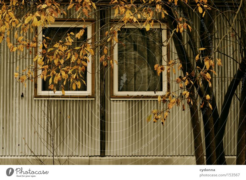 Nature Tree House (Residential Structure) Loneliness Autumn Window Time Retro Transience Derelict Past GDR Nostalgia Old fashioned Vacancy Unused