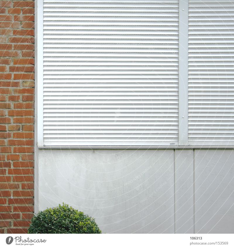 Photo number 107132 Window Roller shutter Roller blind Wall (building) Tree Little tree Bushes Foliage plant Composing Brick Part Industry