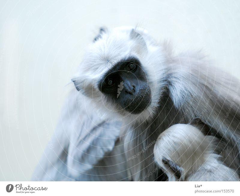 White Eyes Animal Pelt Zoo Testing & Control Silver Facial expression Mammal Monkeys Offspring Baby animal