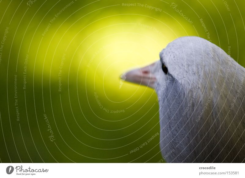 White Green Eyes Freedom Head Gray Bright Bird Flying Aviation Peace Feather Beak Innocent