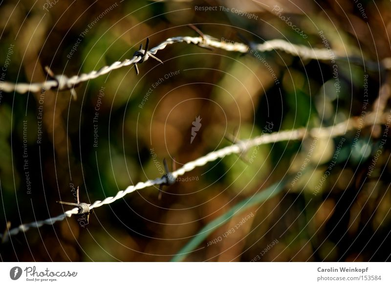 Green Leaf Brown Dangerous Protection Derelict Border Fence Bans Barbed wire Admission Barbed wire fence