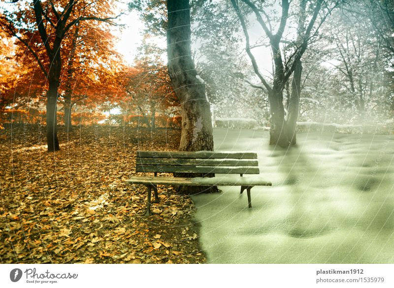 seasons Sun Winter Snow Nature Autumn Beautiful weather Fog Plant Tree Grass Garden Park Forest Wood Sit Manipulation photo manipulation Abstract Dream Fantasy