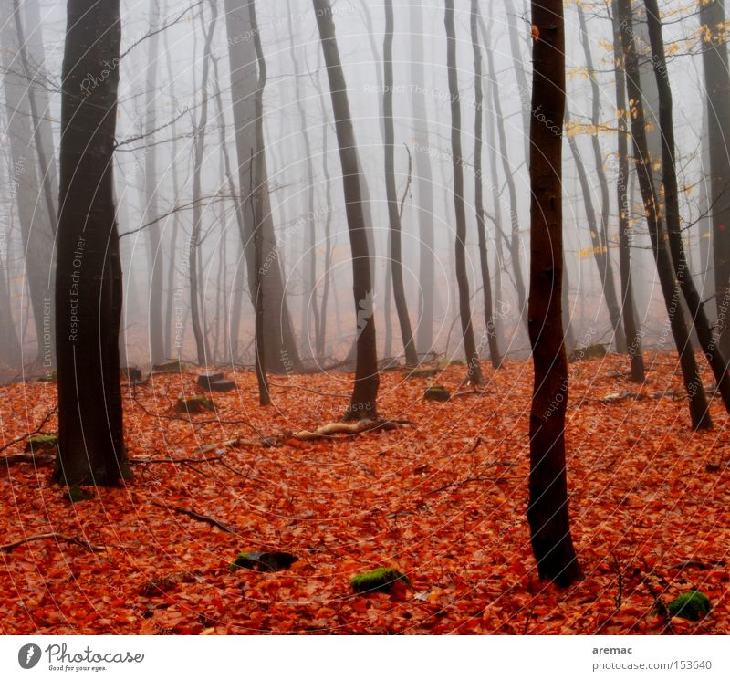 red-light district Fog Forest Tree Nature Landscape Leaf Red Brown Moody Autumn