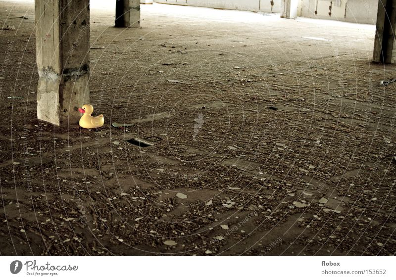 Old Loneliness Yellow Stone Bird Concrete Industry Factory Derelict Toys Shabby Warehouse Captured Hall Duck Penitentiary