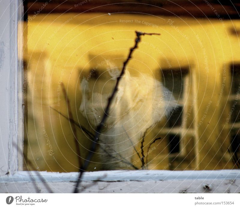 Woman White Joy Yellow Dark Window Laughter Cat Bright Glass Sit Vantage point Window pane Twig Frame Window frame