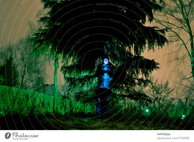 Human being Nature Man Tree Forest Frost Twig Tree trunk Fir tree Freeze Forestry Coniferous trees Forest road