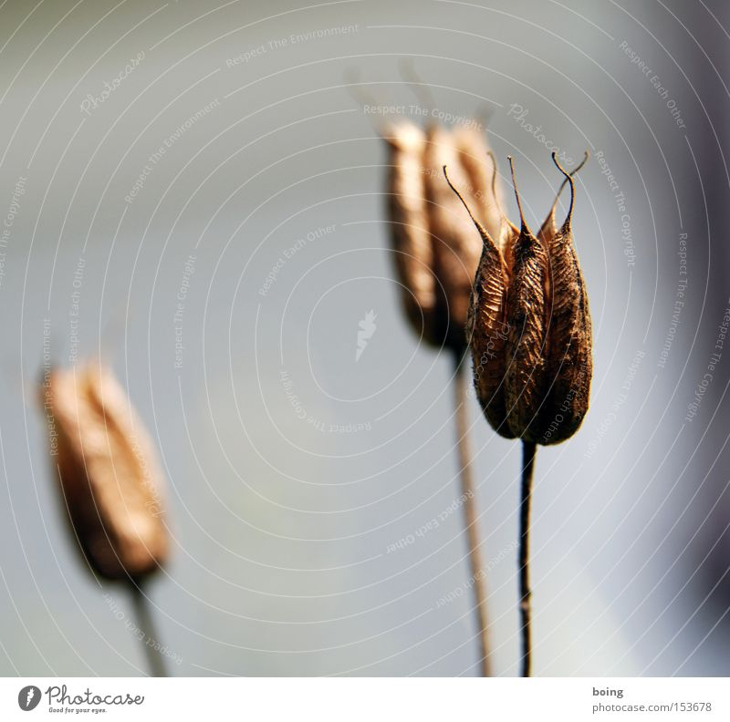 Flower Plant Autumn Death Brown Dry Faded